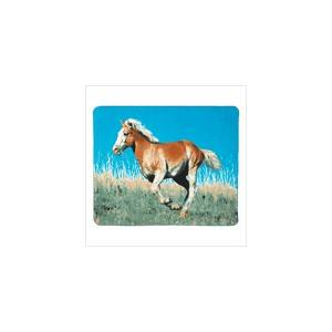 /1748-1814-thickbox/mustang-fleece-blanket.jpg